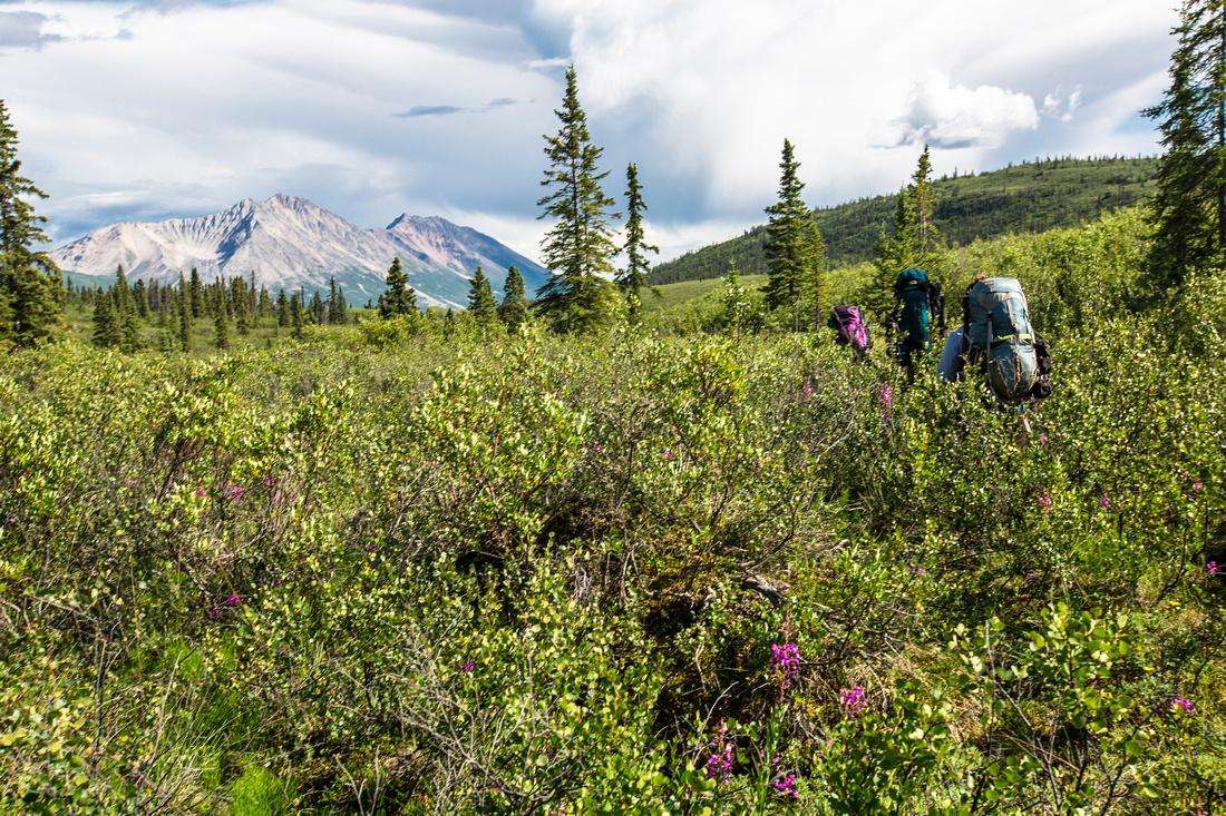 Backpackers Bushwhacking in Donoho Basin