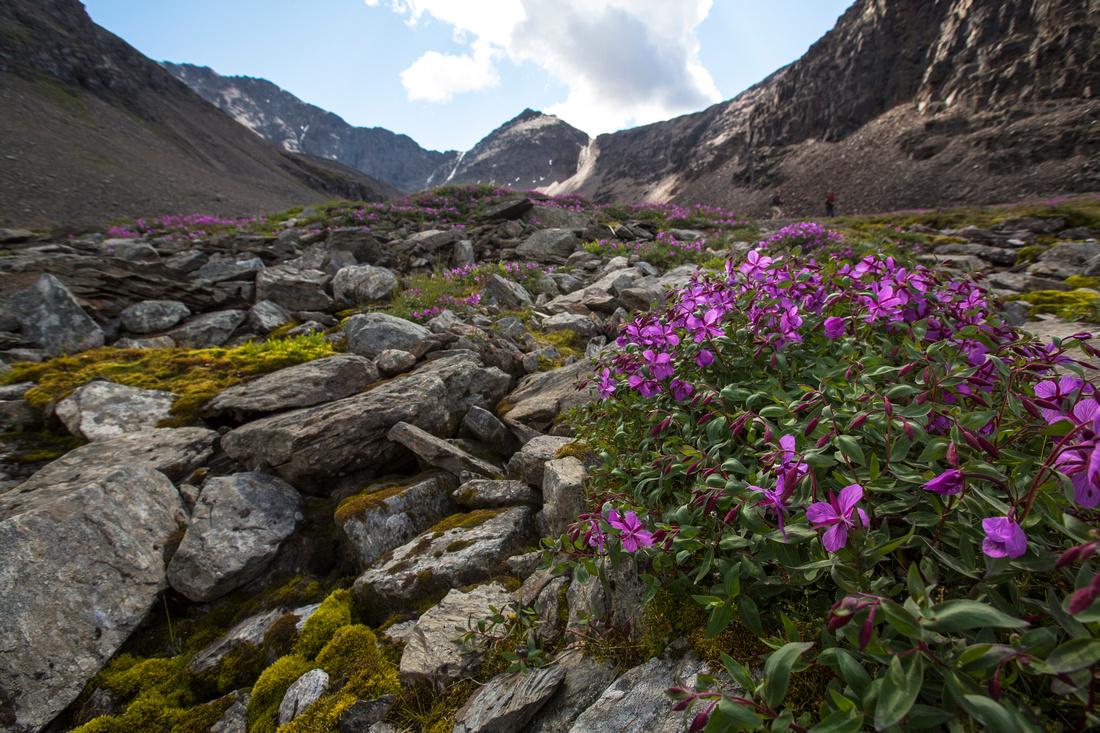 Wildflowers of Bremner (7)