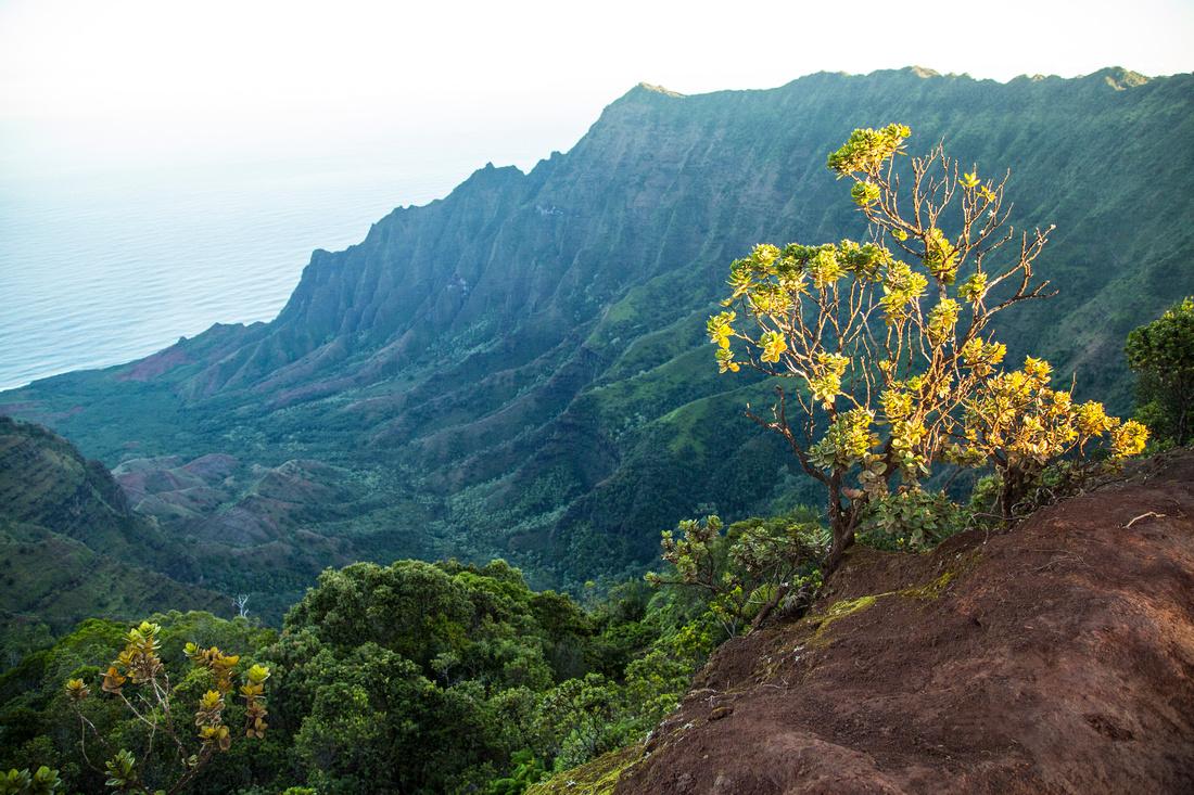 Sunrise from Wai'ale'ale