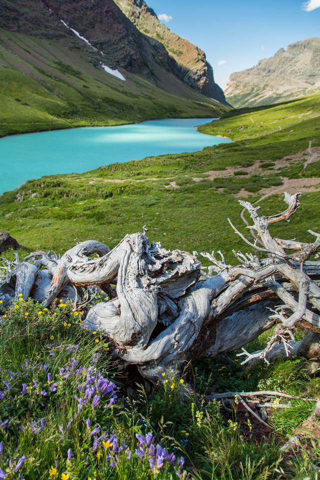Twisted Wood at Cracker Lake