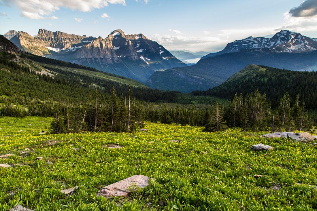Mt. Cannon, Lake McDonald, Heavens Peak and Glacier Lilys