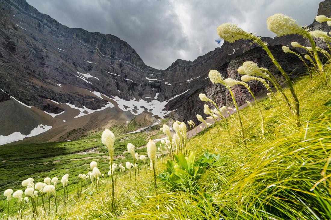 Mount Siyeh and Beargrass