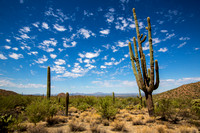 The Mighty Saguaro