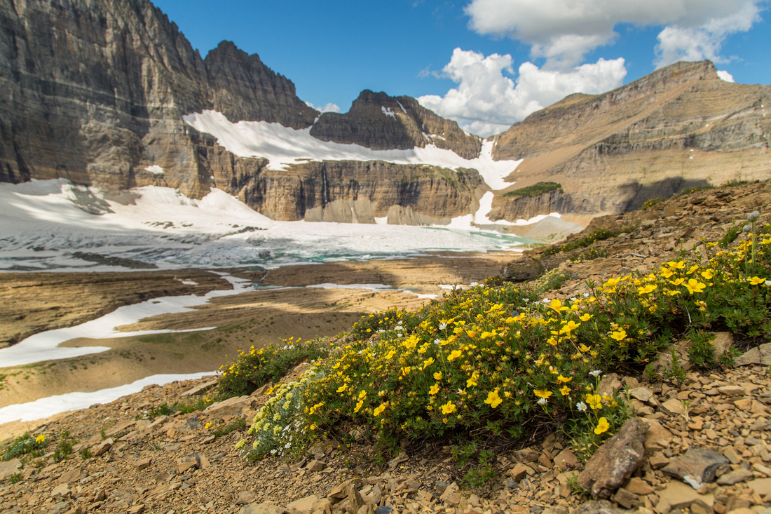 Wildflowers and Grinnell Glacier