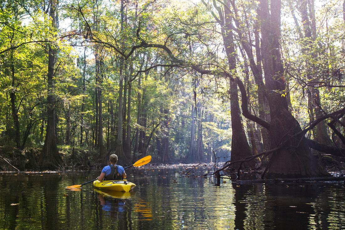 Kayaker on Cedar Creek