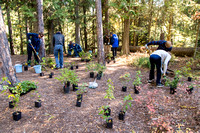 Fish Creek Planting and Monitoring Project 2016 (5)
