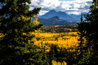 Golden Aspens and Pyramid Mountain