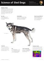 Science of Sled Dogs