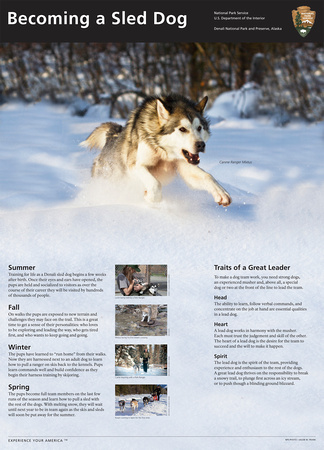 Becoming a Sled Dog