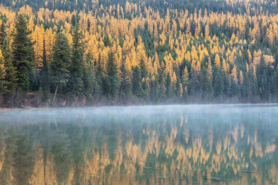 Morning Fog on Bowman Lake