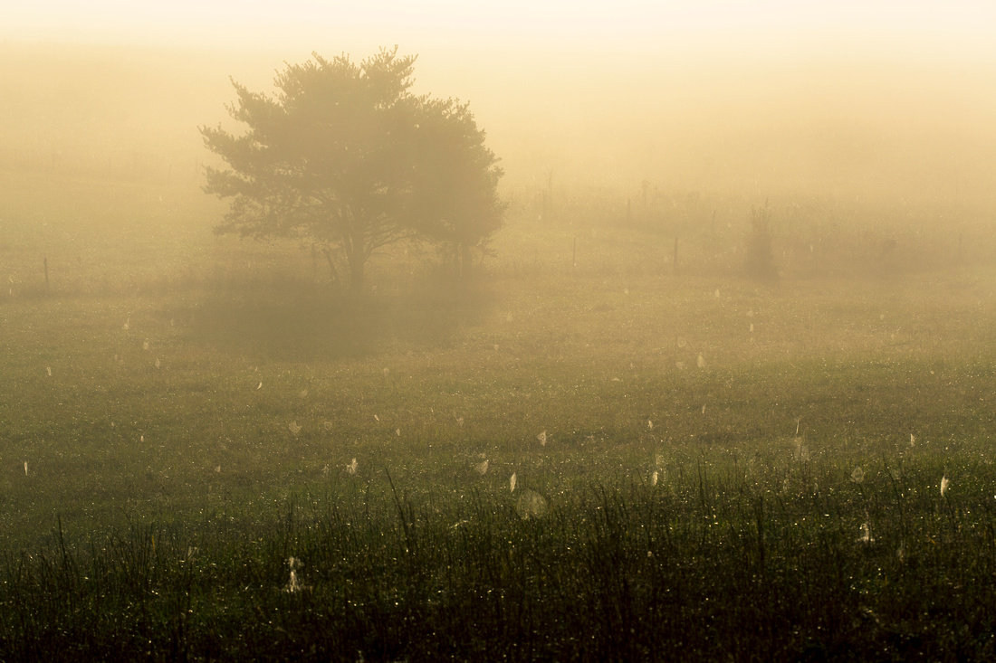 Misty Morning in Cades Cove