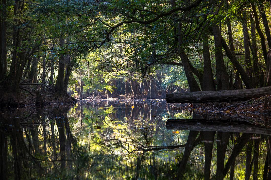 Reflections on Cedar Creek
