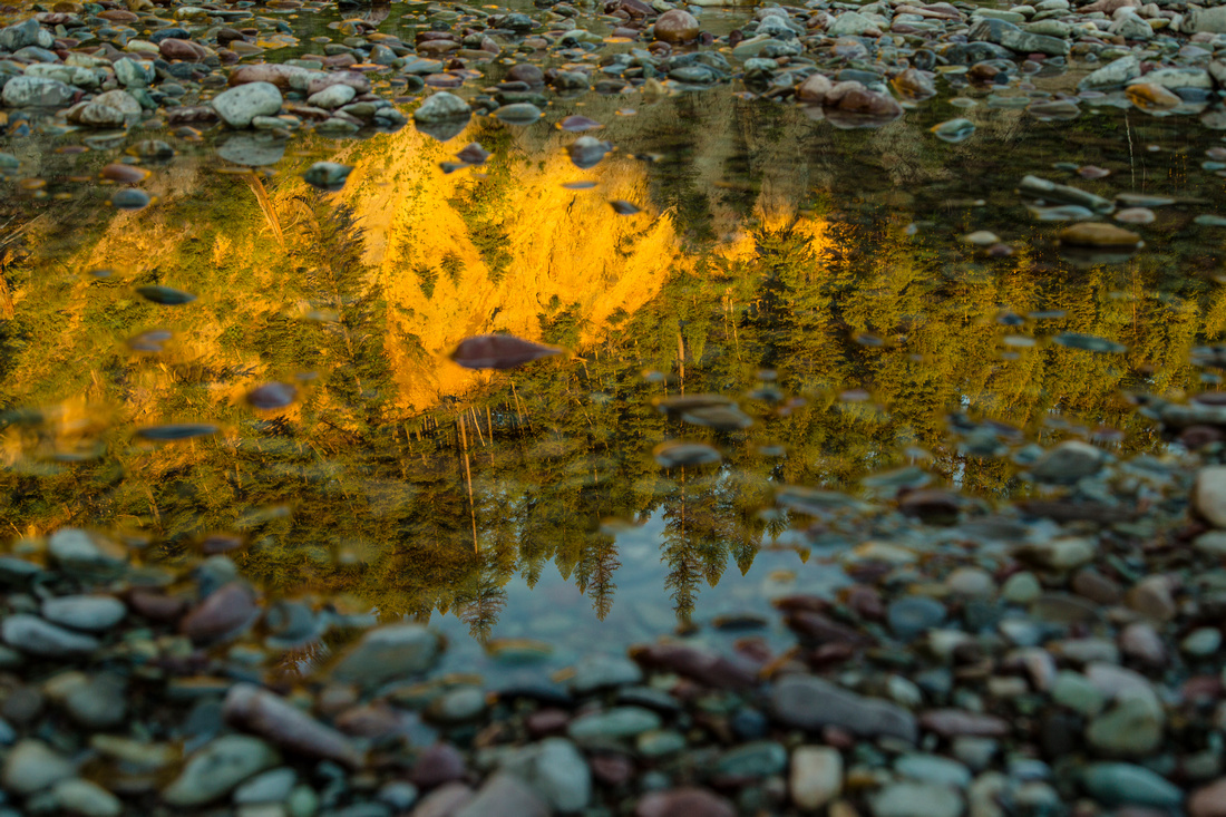 Middle Fork Reflections