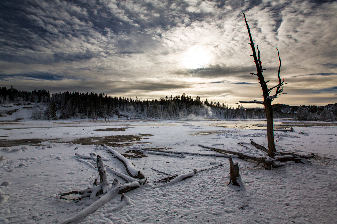 Fresh Snow in Norris Geyser Basin